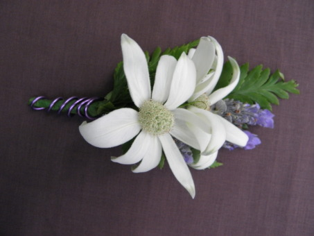 Buttonhole Flannel Flower
