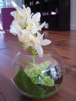Orchids Bowl arrangement
