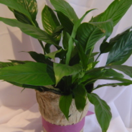 Amaranthine Flowers by Design & Potted Plant | Charlestown Plant Delivery Flower Delivery