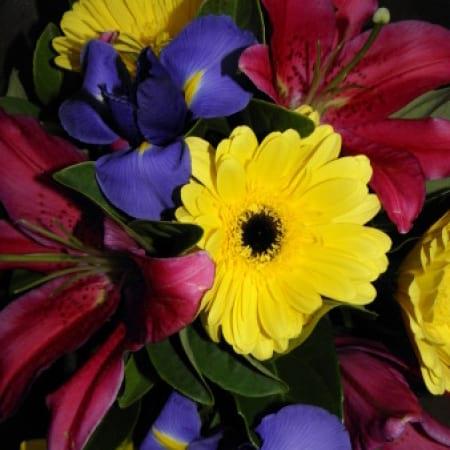 Vibrant flowers Charlestown
