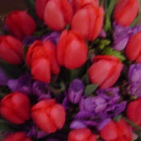 Tulip Mix Bouquet