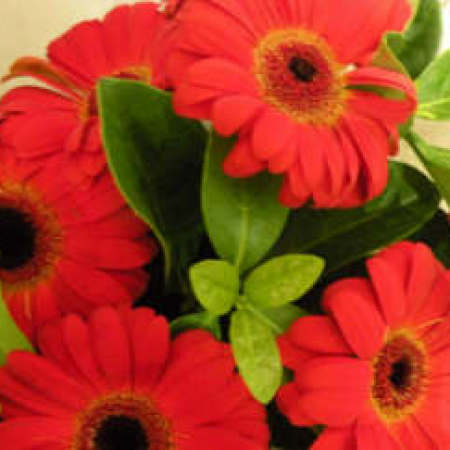 Red Highlight Gerberas Bouquet