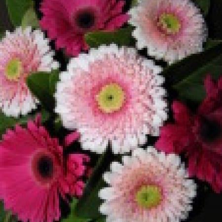 Baby Girl Pink Gerbera Bouquet