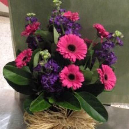Gerbera flower arrangement charlestown