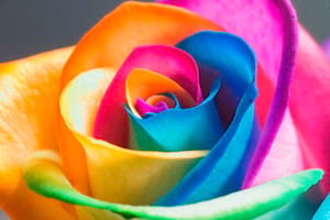 Rainbow Roses Bouquet