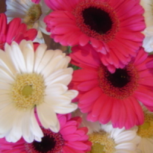 Gerbera Fun Bouquet